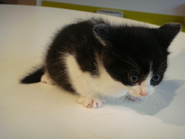 猫 生後2ヶ月